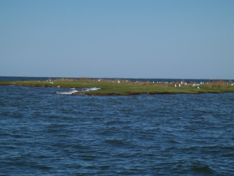 2011 Honga River And Eastern Shore Walleyepete Com