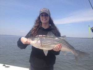 Great Susqy Light Tackle Striper