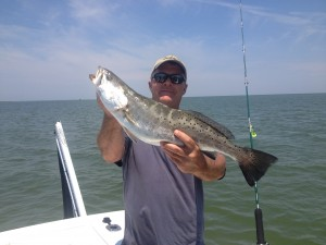 One of several citation Speckled Sea Trout this week!