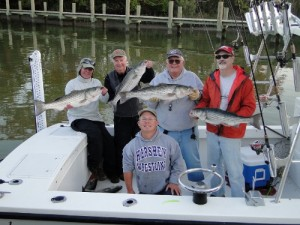 Big Stripers Available on the light Sticks!