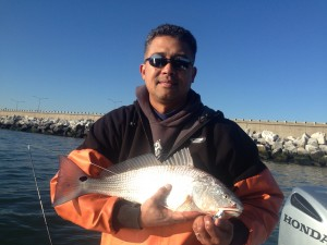 surprising numbers of Red Drum today!