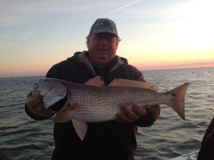 A great winter Red Drum at the CBBT