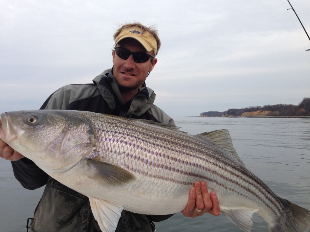 Huge beginning to the annual catch and release trophy for Striper fishing bait