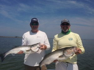 Great stripers caught shallow on light tackle......just awesome!