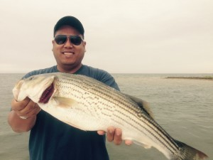 Alan with a real pretty striper in shallow water