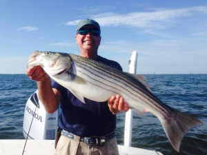 really fat summer stripers on structure!