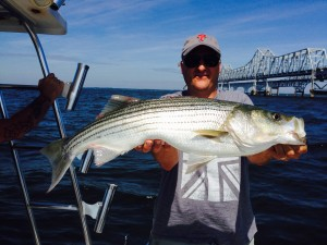 One of many really nice Bay Bridge Stripers this summer!