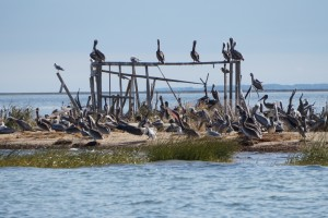 Nothing like a Pelicans Life.......
