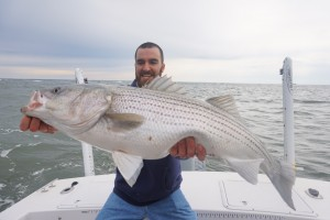 "Really big healthy fat Striper.....40+""er"